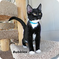 Adopt A Pet :: Bubbles - Dover, OH