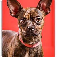 Adopt A Pet :: Stormy - Owensboro, KY