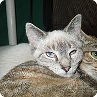 Adopt A Pet :: Herbie - Medina, OH