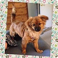 Adopt A Pet :: Bridgette - Knoxville, TN