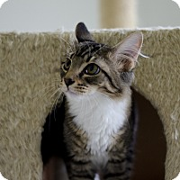 Adopt A Pet :: Louie - Jefferson, NC