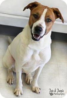 Hound (Unknown Type) Mix Dog for adoption in Yukon, Oklahoma - Daisy