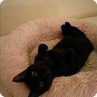 Adopt A Pet :: Raven - Horsham, PA