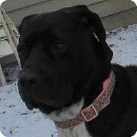 Adopt A Pet :: Paige - Baden, PA