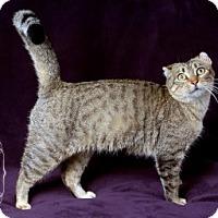 Adopt A Pet :: Ellie Wow 109322 - Joplin, MO