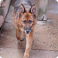 Adopt A Pet :: Willow - Coopersburg, PA
