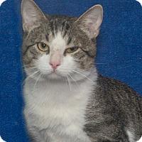 Adopt A Pet :: Bingo - Elmwood Park, NJ