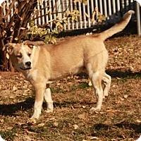 Adopt A Pet :: Russell (adoption fee $200) - Brattleboro, VT