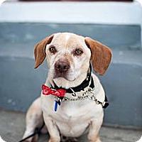 Adopt A Pet :: Owen - Santa Monica, CA