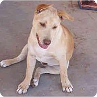 Adopt A Pet :: Amalfi - Scottsdale, AZ