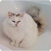 Adopt A Pet :: Kat - Naples, FL