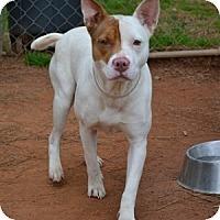 Adopt A Pet :: Keeva - Athens, GA