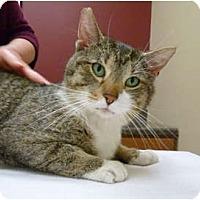 Adopt A Pet :: Paul - Chicago, IL