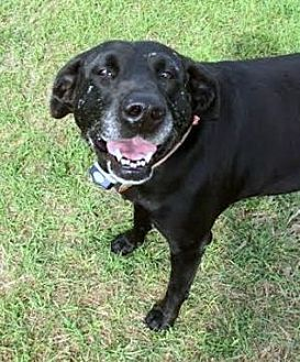 Labrador Retriever Mix Dog for adoption in Denton, Texas - Maggie