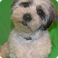 Adopt A Pet :: Markie - Hazard, KY
