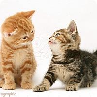 Adopt A Pet :: Derek and Norah - Brockton, MA