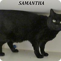 Adopt A Pet :: Samantha - Elizabeth City, NC