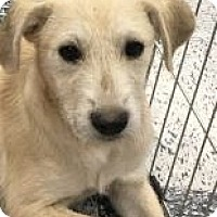 Adopt A Pet :: Oliver - Tucson, AZ