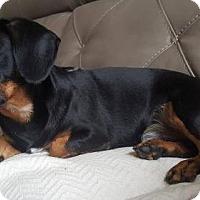 Adopt A Pet :: Hector Napoleon Peabody - Humble, TX