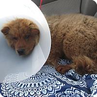 Adopt A Pet :: deja - Marina del Rey, CA