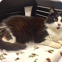 Adopt A Pet :: TUX - Newport, OR