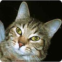 Adopt A Pet :: Hillbilly - Warren, OH