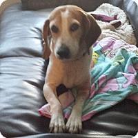 Adopt A Pet :: Ellie Mae - Hamilton, ON