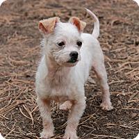 Adopt A Pet :: Minnie - Greeley, CO