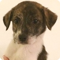 Adopt A Pet :: Ghost#4F - Orlando, FL