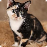 Adopt A Pet :: Ruby - Eagan, MN