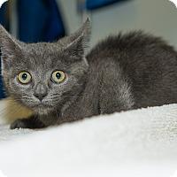 Adopt A Pet :: Sara Jane - New York, NY
