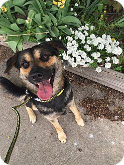 German Shepherd Dog Mix Dog for adoption in Littleton, Colorado - GRETCHEN