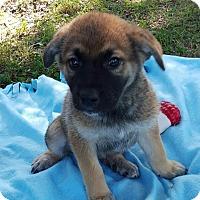 Adopt A Pet :: Marty - Adamsville, TN