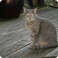 Adopt A Pet :: Maia - Naples, FL