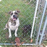 Adopt A Pet :: Mama & Zena - Ocean Ridge, FL