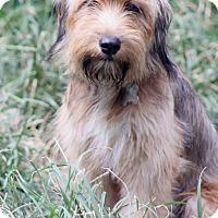 Adopt A Pet :: Ferndale - Norwalk, CT