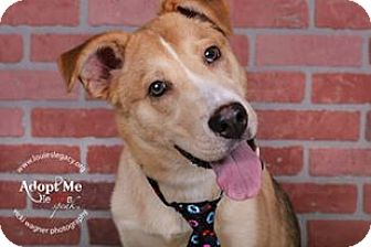German Shepherd Dog Mix Dog for adoption in Cincinnati, Ohio - Ryder