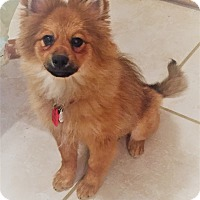 Adopt A Pet :: Beans - conroe, TX