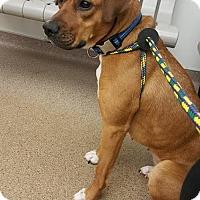 Adopt A Pet :: Olive - Ashland, KY