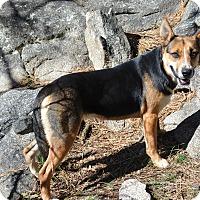 Adopt A Pet :: Aurora - Mountain Center, CA