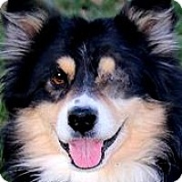 Adopt A Pet :: BREEZE(WHAT A STORY-PLS READ! - Wakefield, RI