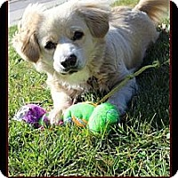 Adopt A Pet :: Cherry Pie - Destrehan, LA