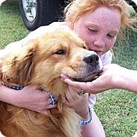 Adopt A Pet :: SCRAPPY - Glastonbury, CT