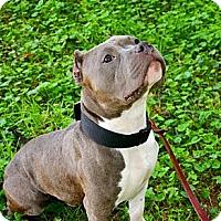 Adopt A Pet :: Mason - Reisterstown, MD