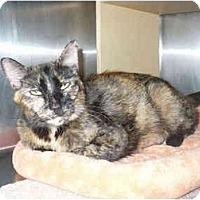 Adopt A Pet :: Ruby - Colmar, PA