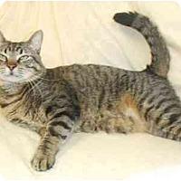 Adopt A Pet :: Zane Gray - Lake Charles, LA