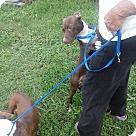 Adopt A Pet :: Thelma / Louise