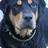 Adopt A Pet :: Brick - Yuba City, CA