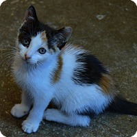 Adopt A Pet :: Rachel! - Brooklyn, NY