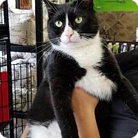 Adopt A Pet :: Patrick - Philadelphia, PA